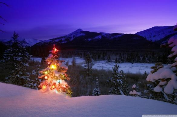Xmas tree with lights