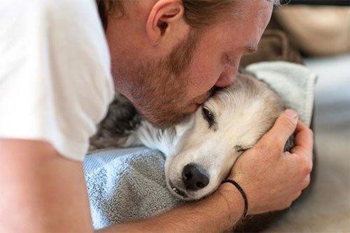 Must love dogs dating australia