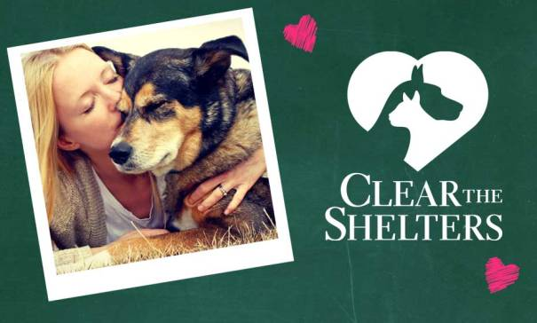 clear-shelters2